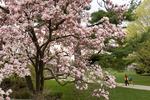 spring msu